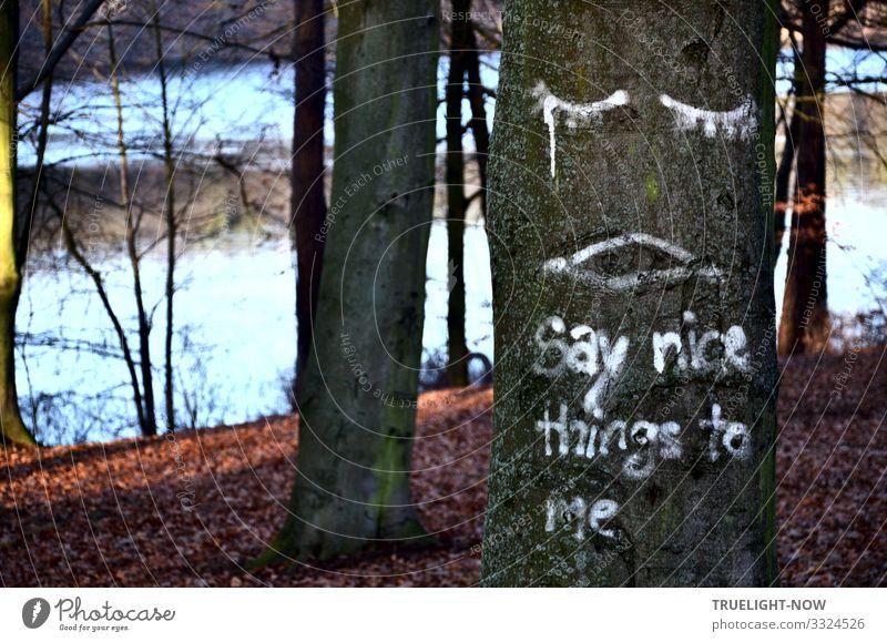 Geschriebenes | In der Sprache der Bäume Natur Landschaft Baum Blatt ruhig Wald Gesundheit Leben Umwelt See Ausflug Freizeit & Hobby wandern Schönes Wetter