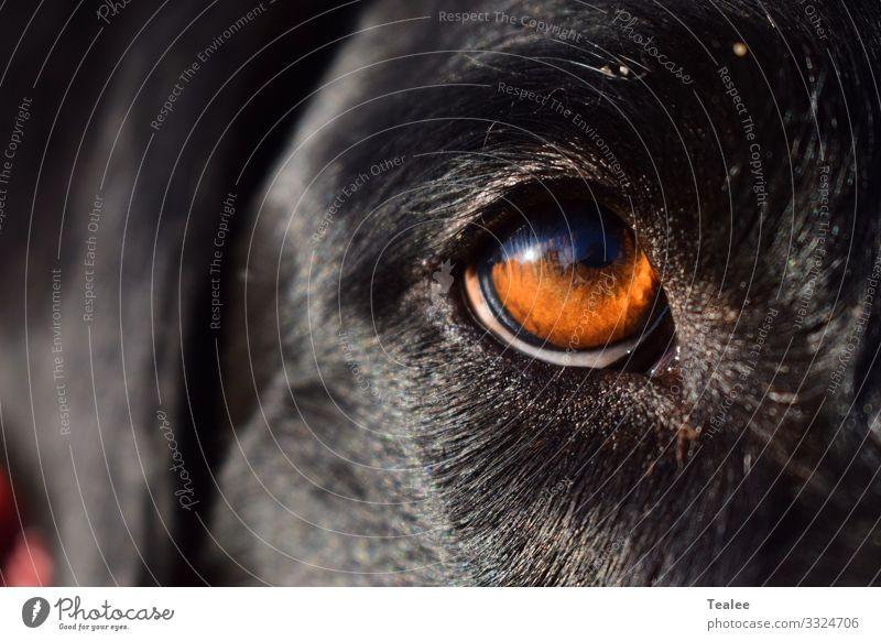Auge des Menschen bester Freund Tier Haustier Hund Tiergesicht 1 ästhetisch authentisch Bekanntheit dunkel einfach frei Freundlichkeit Fröhlichkeit Glück groß