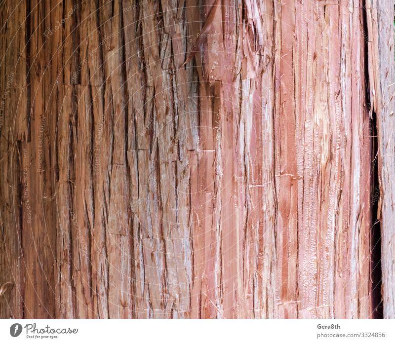 natürliches Baumstamm-Texturmuster in Nahaufnahme Natur Holz Sauberkeit rot Farbe Hintergrund Rinde blanko detailliert orange strukturell Konsistenz Kofferraum