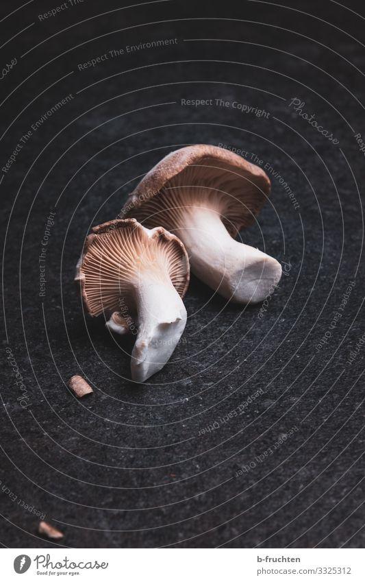 Kräuterseitlinge - frische Pilze Lebensmittel Gemüse Ernährung Bioprodukte Vegetarische Ernährung Asiatische Küche Gesunde Ernährung Essen genießen Gesundheit