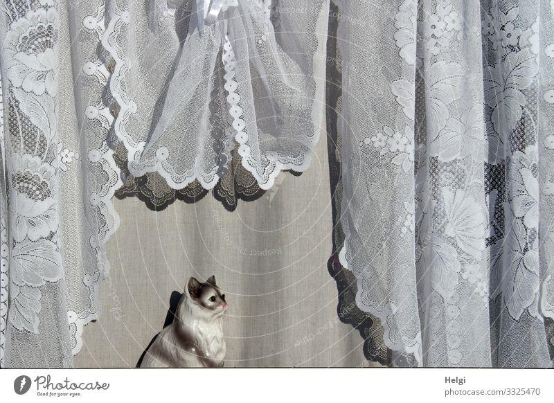 nostalgische Gardine und Katze aus Porzellan am Fenster Ferien & Urlaub & Reisen Wohnwagen Dekoration & Verzierung Kitsch Krimskrams Porzellankatze hängen Blick