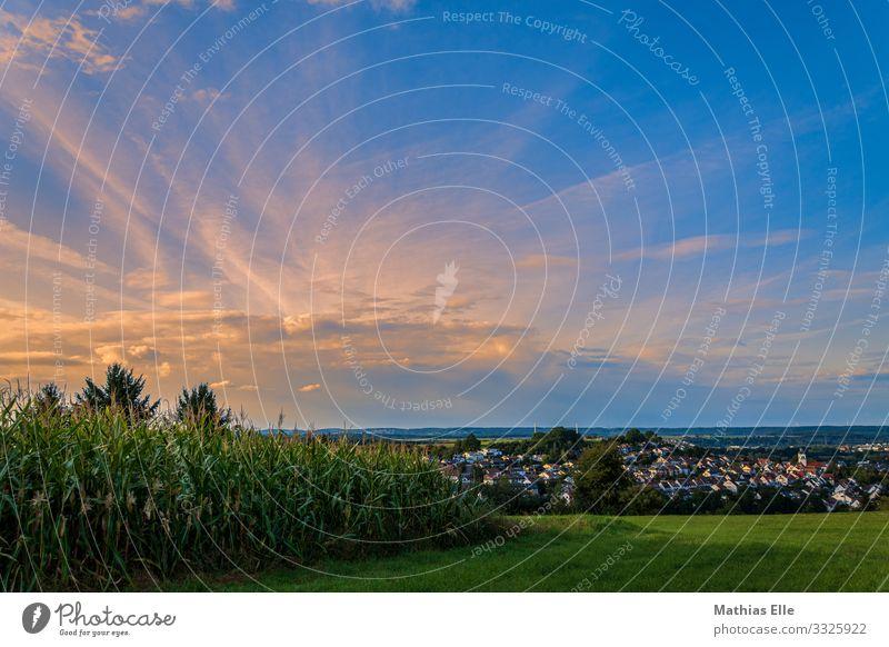 Abendstimmung am Feldrand Himmel Natur Sommer Pflanze blau grün Landschaft Haus Wolken gelb Wiese Idylle Schönes Wetter Sommerurlaub Dorf