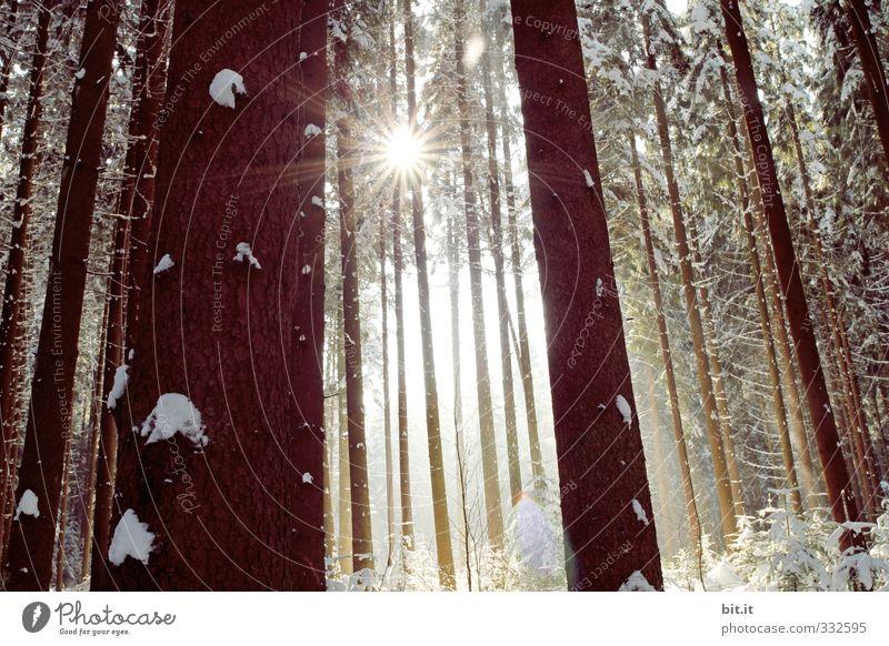 Stern im Ster Umwelt Natur Landschaft Winter Wetter Schönes Wetter Eis Frost Schnee Schneefall Pflanze Wald kalt Stimmung Einsamkeit Frieden rein