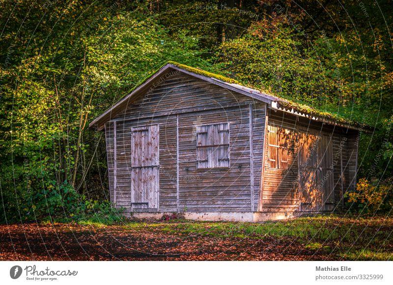 Holzhütte im Wald grün Baum Blatt Architektur Gebäude braun Wohnung Fußweg Dorf Hütte Holzbrett Moos Forstwirtschaft Schuppen