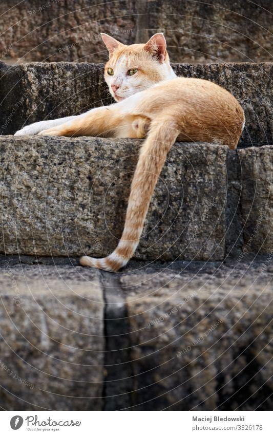 Streunende rote Katze auf Steintreppe liegend. Tier Haustier Wildtier 1 Coolness niedlich wild Einsamkeit Erholung Treppe Irrläufer Katzenbaby eine Säugetier