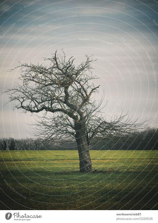 Einsamer kahler Baum auf der Wiese Umwelt Natur Landschaft Pflanze Tier Urelemente Himmel Herbst Winter Klima Klimawandel schlechtes Wetter Park Feld Wald alt