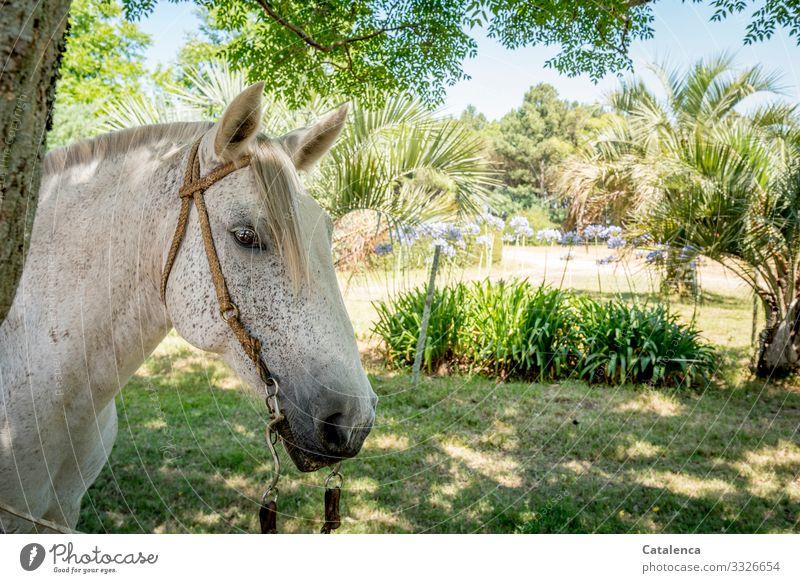 Pferdekopf im Halbschatten der Bäume Tierhaltung Pflanze Landschaft Natur Nutztier Himmel schönes Wetter Tageslicht Flora Sommer Gras Schatten Zaumzeug