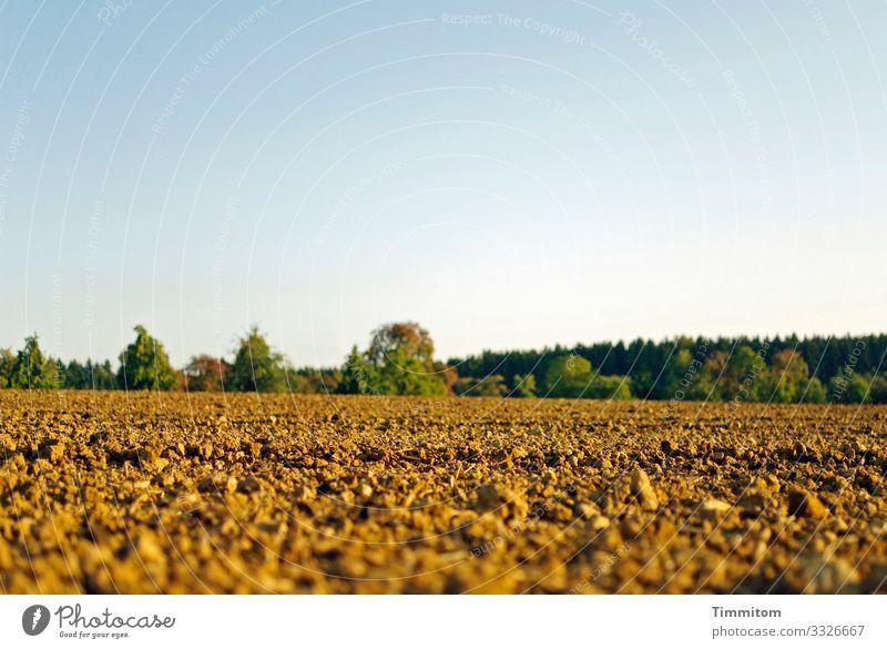 Ein weites Feld Acker Ackerboden Baum Bäume am Horizont Wald natürlich Landschaft Umwelt Landwirtschaft grün braun blau Himmel Menschenleer Ackerbau