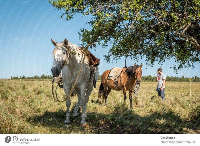 Wartend stehen Pferde und ihre Reiter im hohen Gras Tageslicht schönes Wetter Himmel Horizont Nutztier Tier Natur Landschaft Pflanze Sommer Tierhaltung