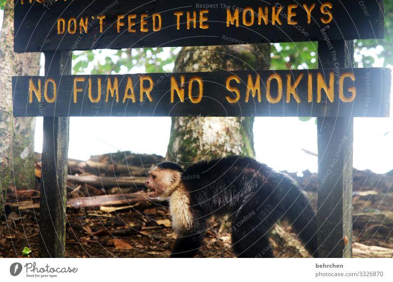geschriebenes | aufforderung Ferien & Urlaub & Reisen Tourismus Ausflug Abenteuer Ferne Freiheit Urwald Wildtier Tiergesicht Fell Affen Kapuzineraffen