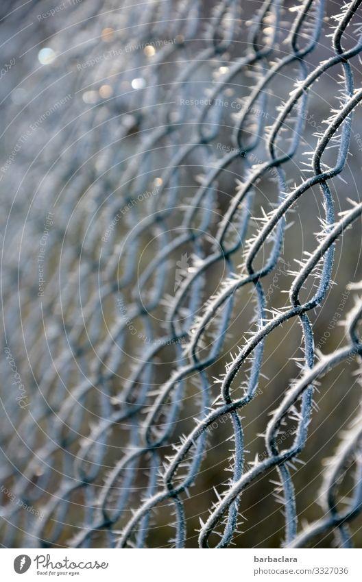 Eiszeit | am Zaun Winter Klima Frost Maschendrahtzaun Metall Linie Netzwerk leuchten glänzend hell kalt Spitze stachelig silber weiß Natur Schutz Umwelt