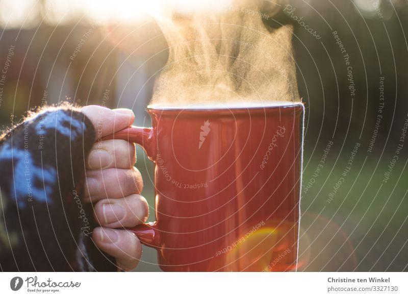 Hand hält roten Becher mit dampfendem Getränk gegen das Licht Heißgetränk Tee Glühwein Frau Erwachsene Finger 1 Mensch 45-60 Jahre Garten festhalten authentisch