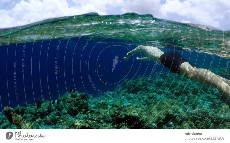 Schnorcheln Wassersport Schwimmen & Baden Junger Mann Jugendliche Sommer Wellen Küste Riff Korallenriff Meer Badehose Fisch Aquarium blau grün Farbfoto