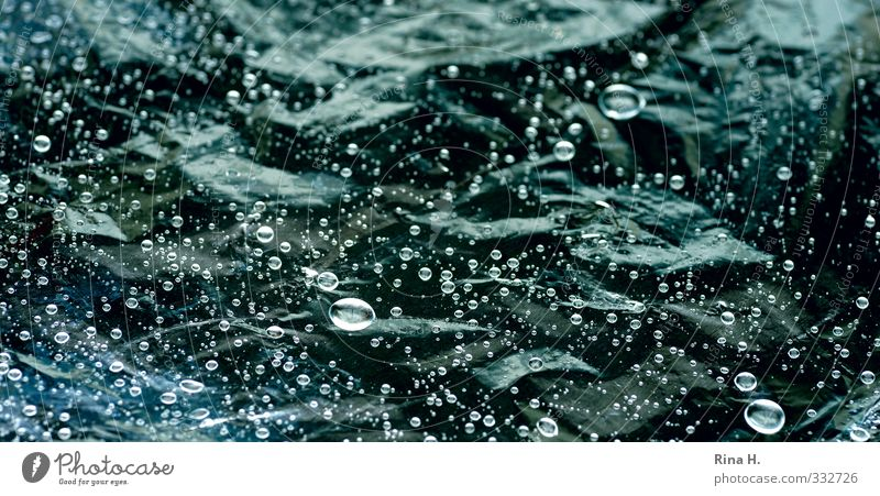 RegenFoto grün glänzend nass Wassertropfen