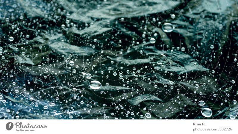 RegenFoto Wassertropfen glänzend nass grün Strukturen & Formen Gedeckte Farben Außenaufnahme Menschenleer