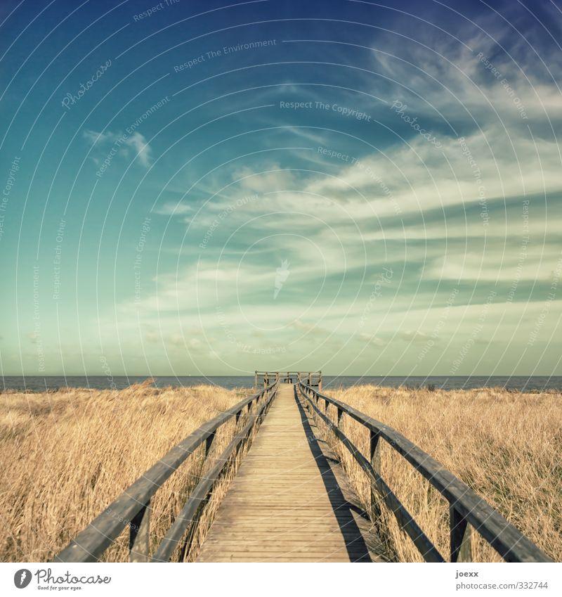 Am Ende die Freiheit Landschaft Himmel Wolken Horizont Sommer Schönes Wetter Gras Feld Küste Nordsee Insel Amrum Menschenleer Wege & Pfade Holz alt blau braun