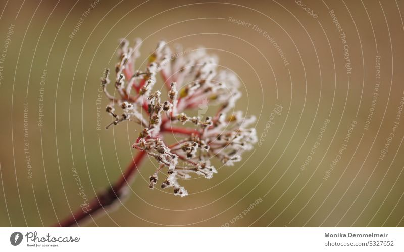 Winter Wellness Natur Pflanze Eis Frost Wiese Feld Wald kalt Zufriedenheit Fotografie Vergänglichkeit Kraft Freiheit Seele Landschaft Heimat Kristallstrukturen
