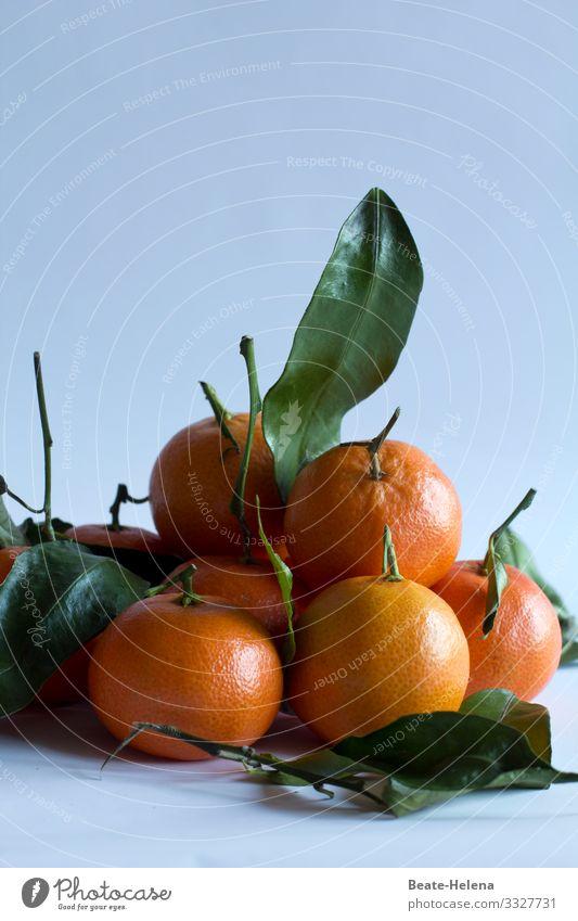 Mandarinen Lebensmittel Frucht Orange Ernährung Bioprodukte Vegetarische Ernährung Fasten Lifestyle kaufen Gesundheit Gesunde Ernährung Kunstwerk Natur Baum