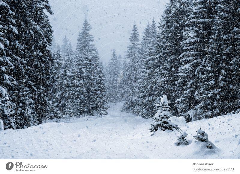 Schnee Ferien & Urlaub & Reisen Natur Landschaft Baum Wald Winter kalt Wege & Pfade Schneefall wandern Eis Wetter Wind Klima geheimnisvoll
