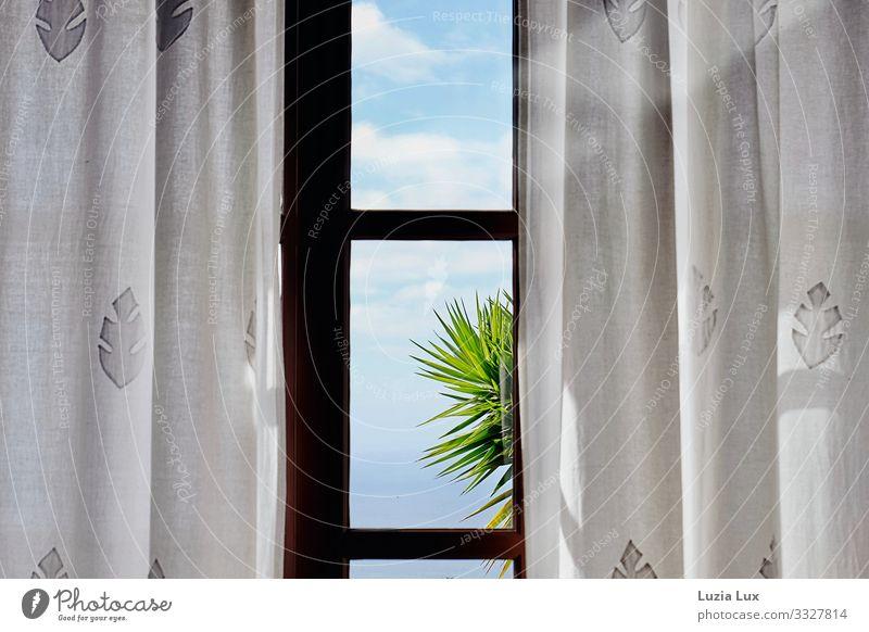 Palme vor dem Fenster Himmel Wolken Sonnenlicht Schönes Wetter exotisch Glas hell blau weiß Vorhang Gardine Palmenwedel mehrfarbig Innenaufnahme Menschenleer