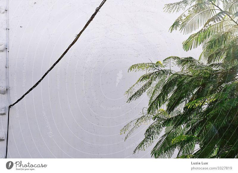 Zartes Grün Pflanze grün weiß Baum Blatt Wand Mauer