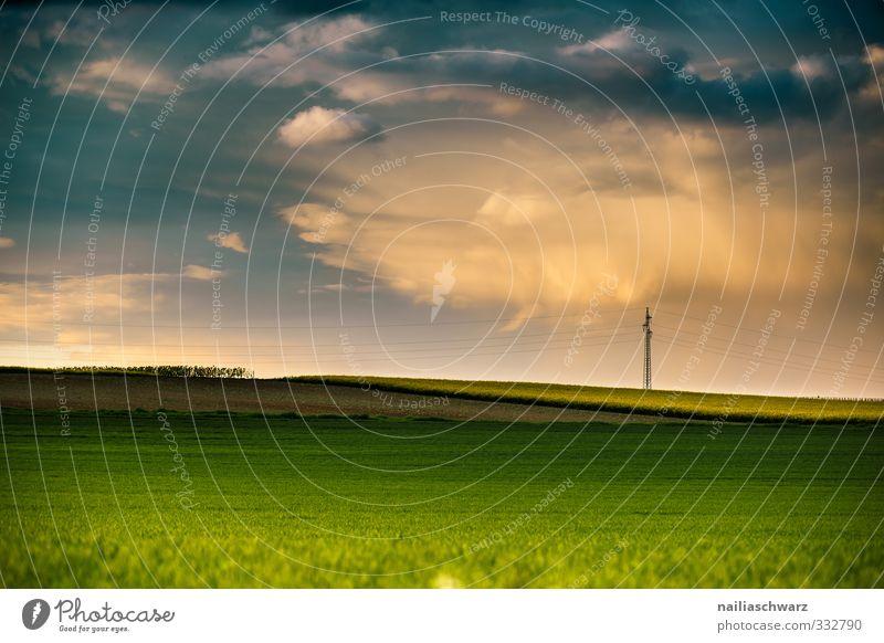 Rapsfeld Natur blau grün schön Sommer Pflanze Landschaft Wolken Umwelt gelb Wiese Wärme Frühling Blüte Horizont natürlich