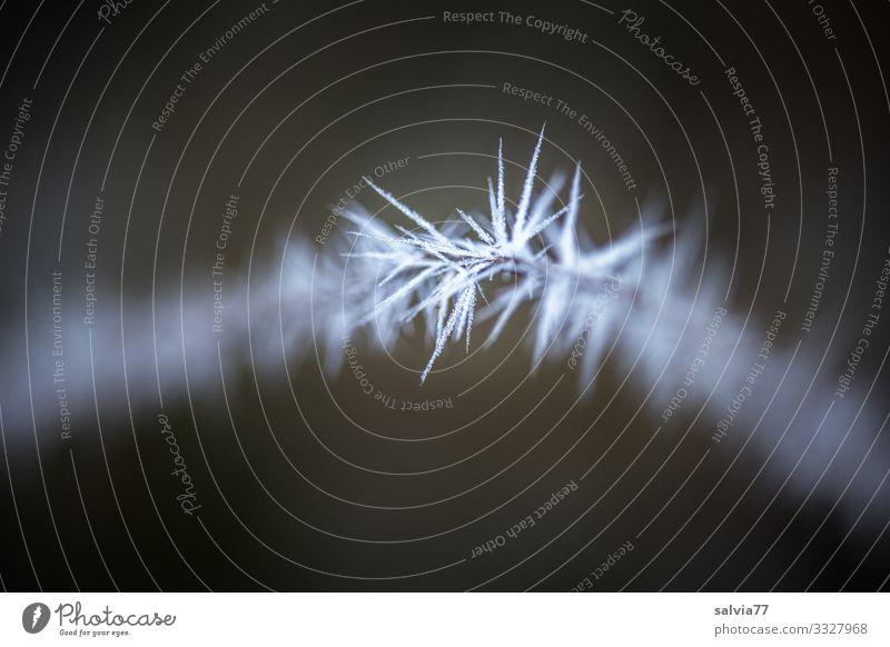 Eiszeit   Eisstacheln Umwelt Urelemente Wasser Winter Klima Frost Zweig außergewöhnlich dunkel dünn kalt Spitze stachelig Raureif Stacheldraht Schwarzweißfoto