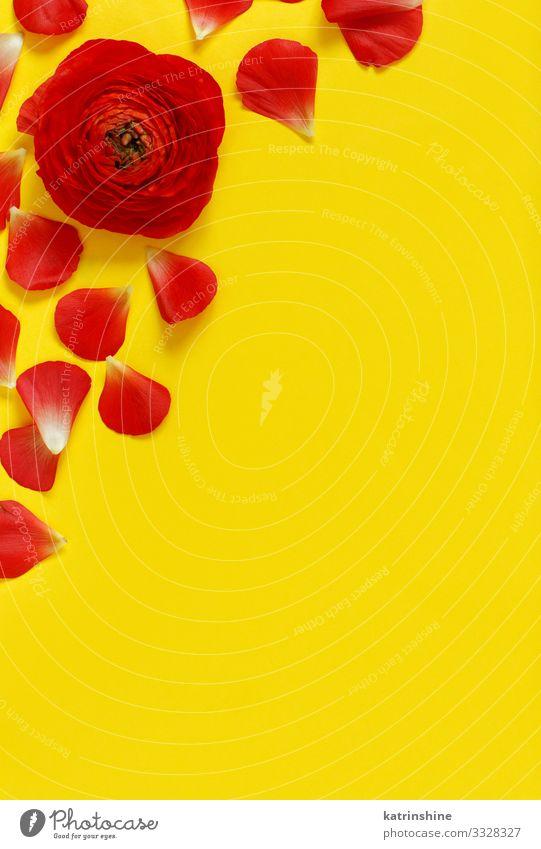 Rote Blumen und Blütenblätter auf gelbem Hintergrund Design Dekoration & Verzierung Hochzeit Frau Erwachsene Mutter Rose hell rot Kreativität romantisch orange