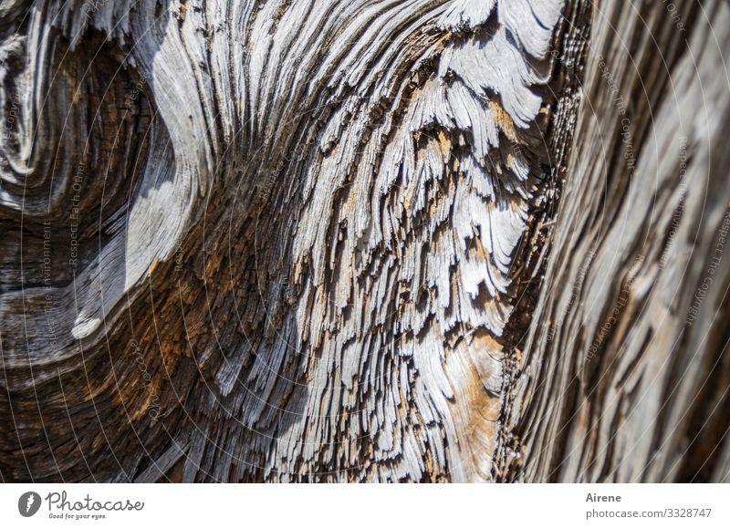 was Holz so alles kann Natur außergewöhnlich braun Wachstum Kreativität einzigartig Baumstamm exotisch skurril Charakter komplex Maserung Schattenspiel holzig