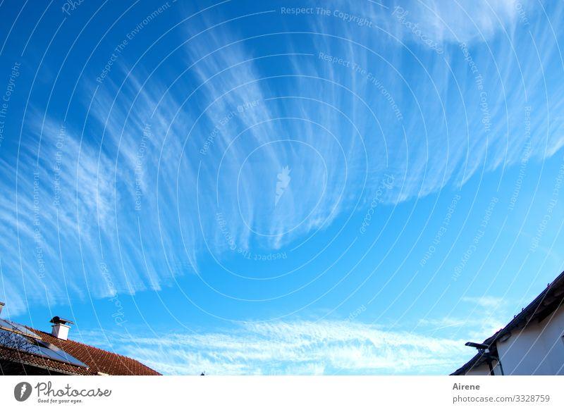 Es liegt was in der Luft Tag Außenaufnahme Farbfoto oben heiter Flaum federartig Meteorologie Wetterdienst Bedeutung vorhersagen Muster Zeile Streifen Sonne