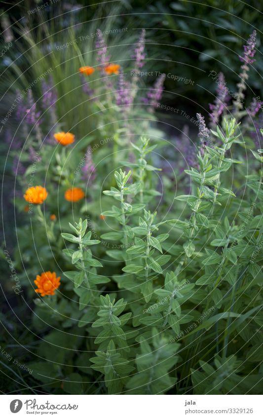 . Natur Pflanze Blume Gras Sträucher Blatt Blüte Grünpflanze Wildpflanze Garten Freundlichkeit Fröhlichkeit frisch natürlich Farbfoto Außenaufnahme Menschenleer