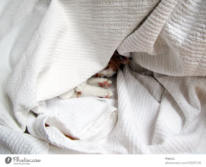 Tagesdecke Bett Schlafzimmer Haustier Katze 1 Tier schlafen träumen kuschlig niedlich Vertrauen Sicherheit Schutz Geborgenheit Tierliebe Farbfoto