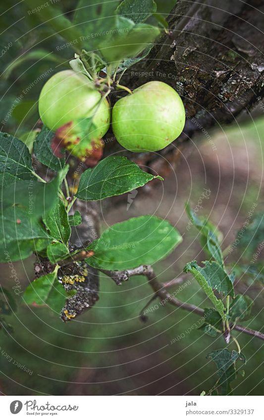 äpfel Lebensmittel Frucht Apfel Natur Pflanze Baum Blatt Nutzpflanze Apfelbaum frisch Gesundheit natürlich Wachstum Ernte Farbfoto Außenaufnahme Menschenleer