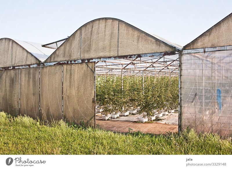 gewächshaus Arbeit & Erwerbstätigkeit Beruf Gartenarbeit Arbeitsplatz Landwirtschaft Forstwirtschaft Himmel Gras Gebäude Gewächshaus Farbfoto Außenaufnahme