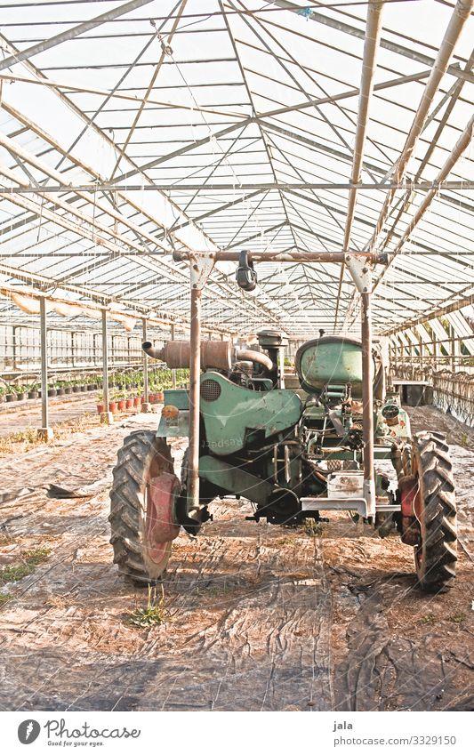 Gefährt Arbeit & Erwerbstätigkeit Gartenarbeit Landwirtschaft Forstwirtschaft Bauwerk Gebäude Gewächshaus Fahrzeug Traktor einfach Farbfoto Innenaufnahme