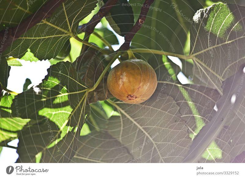 feige Lebensmittel Frucht Feige Bioprodukte Vegetarische Ernährung Natur Pflanze Schönes Wetter Baum Blatt Nutzpflanze Garten frisch Gesundheit lecker natürlich