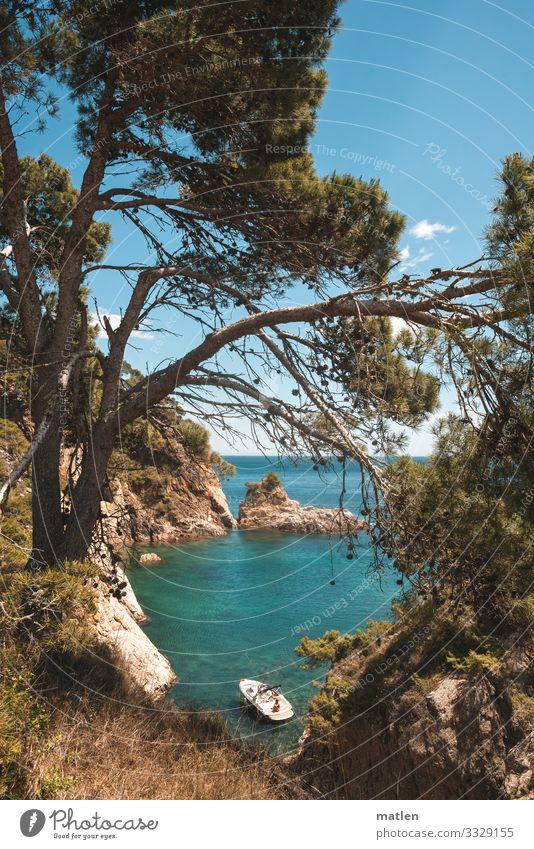 Traumbucht für einen verregneten Sonntag Natur Landschaft Pflanze Himmel Wolkenloser Himmel Horizont Sonne Frühling Schönes Wetter Baum Gras Felsen Küste Bucht