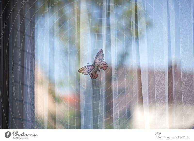 butterfly Wohnung Himmel Fenster Vorhang Schmetterling geheimnisvoll Sicherheit Etikett Farbfoto Außenaufnahme Menschenleer Tag Licht Schatten