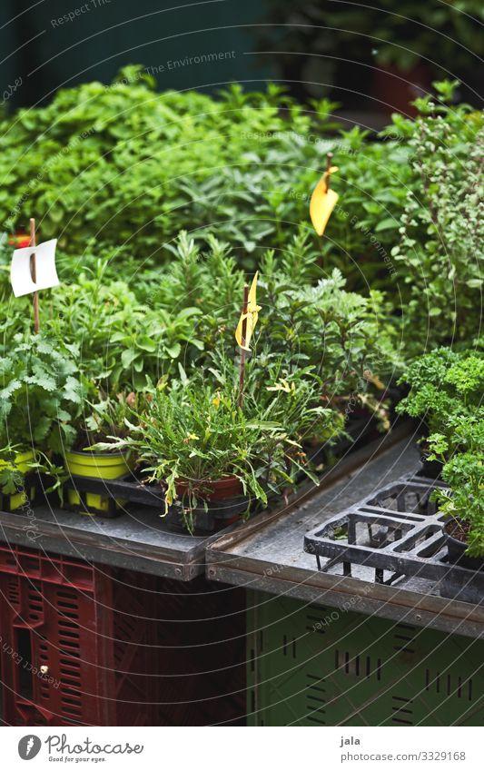 grünzeug Lebensmittel Kräuter & Gewürze Bioprodukte Pflanze Grünpflanze Nutzpflanze Topfpflanze frisch natürlich Markt Marktstand Farbfoto Außenaufnahme
