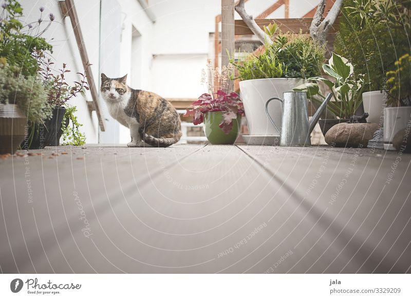 kätzel Pflanze Gras Sträucher Grünpflanze Topfpflanze Gebäude Fassade Terrasse Tier Haustier Katze 1 loyal Sympathie Freundschaft Tierliebe Farbfoto