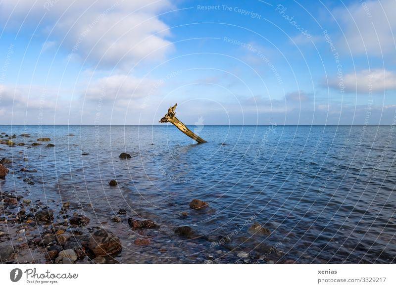 Baumstumpf am Brodtener Ufer Himmel Natur blau Wasser Landschaft Wolken Ferne Strand Küste Deutschland Horizont Wellen Schönes Wetter Wandel & Veränderung