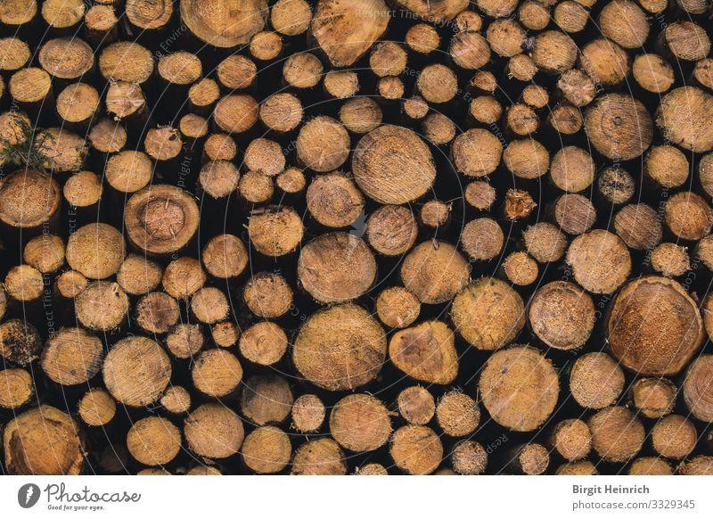 Baumstämme Umwelt Natur Winter Klima Klimawandel Wald Raummeter Jahresringe Todholz Ofen Kamin Holz Glück Zufriedenheit Lebensfreude Warmherzigkeit