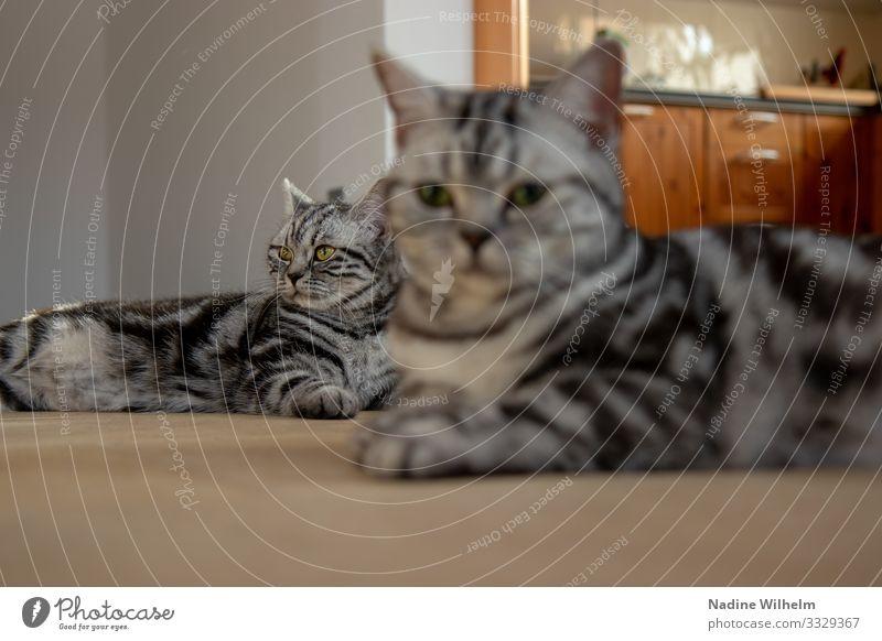 Who's bigger? Tier Haustier Katze 2 Tierjunges Erholung liegen Blick träumen schön lang unten Wärme braun grau orange schwarz silber weiß Vertrauen Geborgenheit