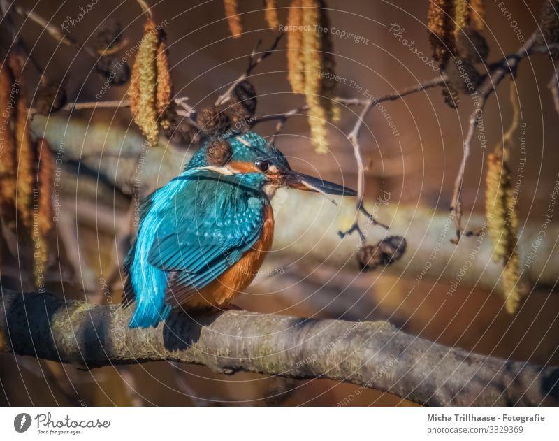 Eisvogel im Baum Umwelt Natur Tier Sonne Sonnenlicht Schönes Wetter Zweige u. Äste Seeufer Flussufer Wildtier Vogel Tiergesicht Flügel Eisvögel Schnabel Kopf