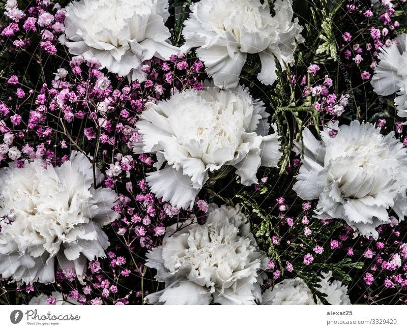 Blumenhintergrund mit rosa und weißen Blumen schön Sommer Garten Dekoration & Verzierung Hochzeit Geburtstag Mutter Erwachsene Kunst Natur Pflanze Rose Blatt