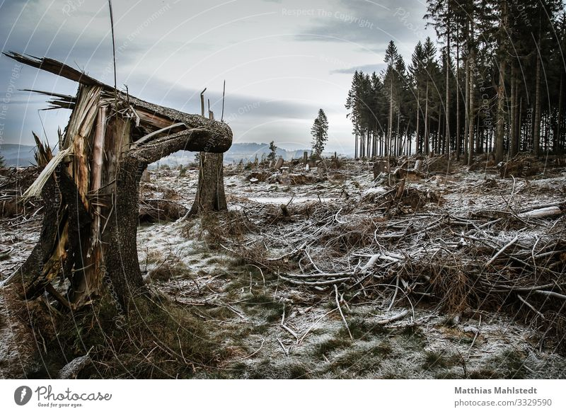 Nach dem Sturm Natur Pflanze Landschaft Baum Wald Winter Holz Umwelt braun grau Eis Wetter trist Klima Frost Zukunftsangst