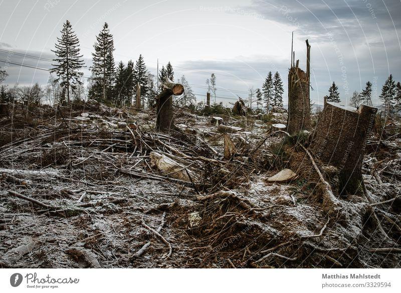 Sturmschäden im Wald Umwelt Natur Landschaft Pflanze Winter Klima Klimawandel Wetter Baum Lüdenscheid trist grau Zukunftsangst Endzeitstimmung Umweltschutz