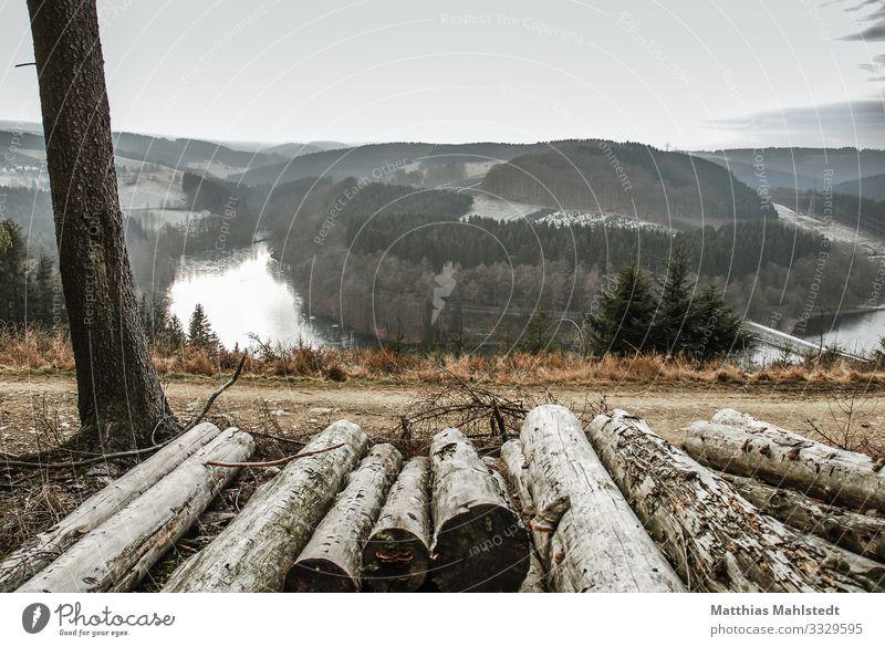 Blick ins Tal Umwelt Natur Landschaft Winter Schnee Baum Wald Seeufer Talsperre Versetalsperre natürlich grau Ferne Ungesättigt Farbfoto Gedeckte Farben