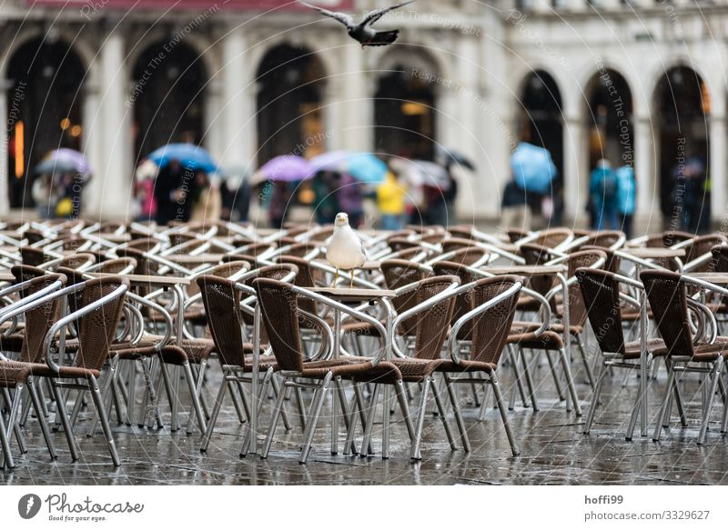Regen in Venedig Wetter schlechtes Wetter Wind Platz Piazza Venezia Markusplatz Vogel Taube Möwe Möwenvögel Stuhl Regenschirm kalt nass Enttäuschung Einsamkeit