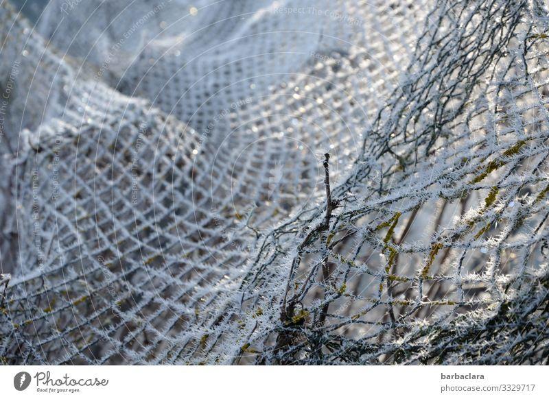 Winternetz Pflanze Eis Frost Garten Zaun Netz hell kalt weiß Klima Natur Netzwerk Schutz Gedeckte Farben Außenaufnahme Nahaufnahme Detailaufnahme abstrakt